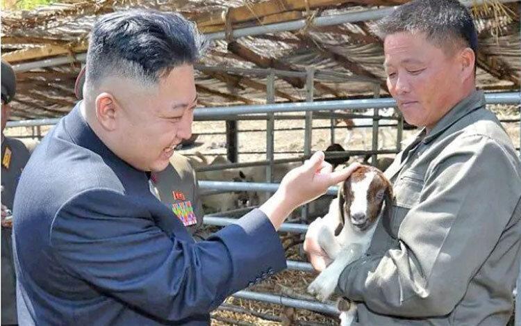 حل بحران غذای کره شمالی با گوشت سگ؟ ، کیم جونگ-اون دستور جمع آوری سگ های خانگی را صادر کرد