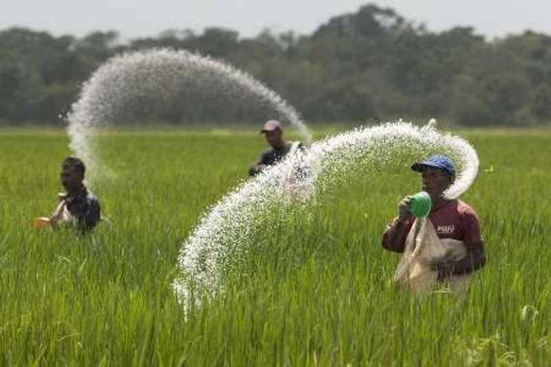 ملک زاده: افزایش قیمت کود فراوری را برای 80 درصد کشاورزان از صرفه انداخت
