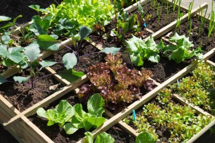 آموزش کاشت 10 نوع سبزیجات پرمصرف در خانه