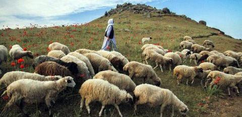 فرهنگ دامداری سنتی جنوب خراسان به اطلس مردم نگاری ایران وارد شد، نخستین پژوهش حوزه دامداری سنتی در ایران به سرانجام رسید